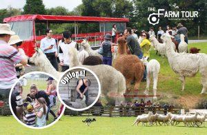 rotorua attractions
