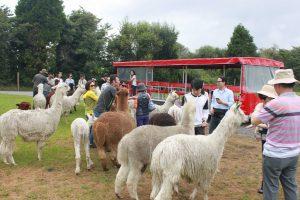 Rotorua Attractions The Farm Tour 02